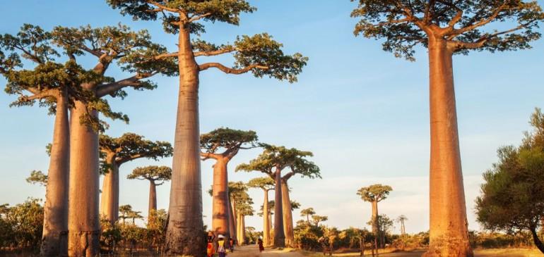 Madagaskar (26 Ağustos – 05 Eylül 2017)